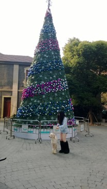 Christmas on Fuxing Road