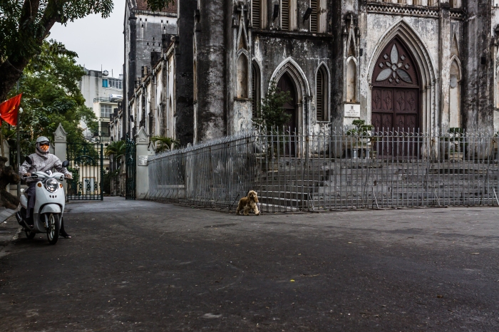A Catholic Cathedral in Old Hanoi, a Cocker Spaniel and a woman getting ready to enter the traffic insanity of Hanoi's streets.