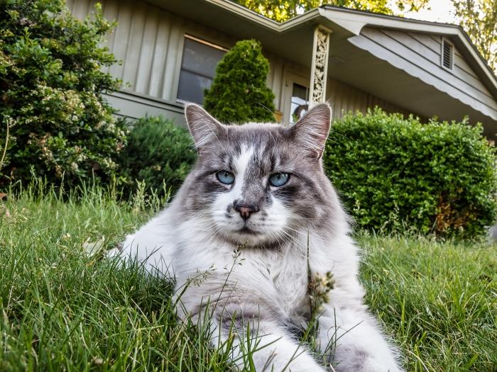 Detective Elliot Stabler, cat.