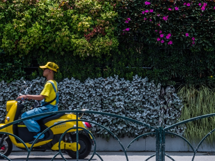 Scooter drives by a flowering construction wall; on the sidewalk, of course.
